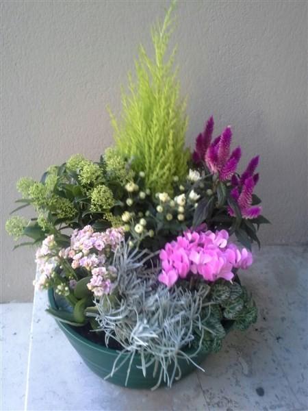 Coupe de plantes santoline artisan fleuriste for Livraison fleurs rennes